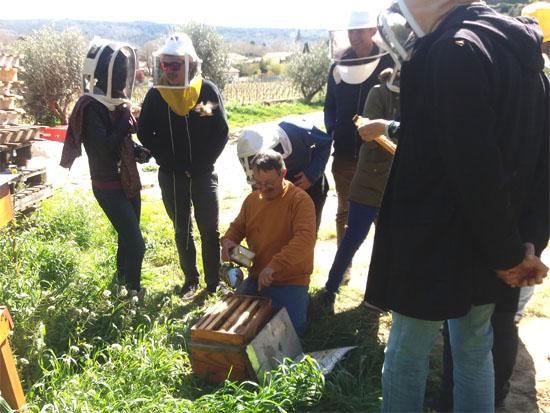 Journée chez un apiculteur